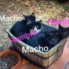 Pagamos la esterilziación y vacunas de 4 gatitos abandonados