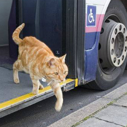 Cat-rides-bus-in-Bridport-Dorset-England