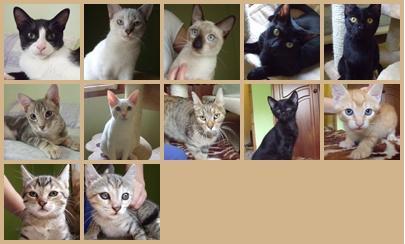 gatosraquel